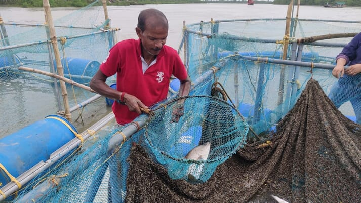Net pen aquaculture is still in its infancy in India, but looks likely to grow rapidly in the coming years