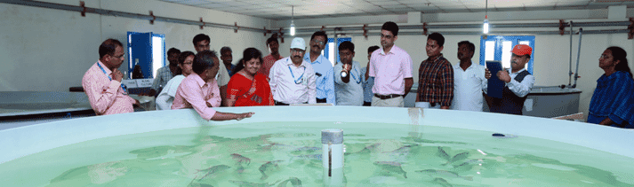 CIBA aims to provide Kerala's aquaculture sector with a year-round supply of Asian seabass, milkfish and pearl spot juveniles