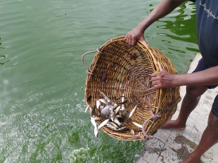 Fish stocked include the Indian major carp species silver carp, common carp, mrigal, rohu and catla
