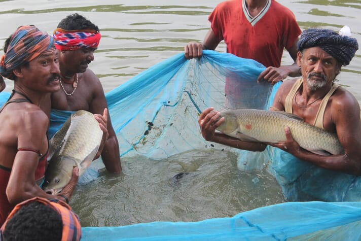 Indian fish farmers could benefit from access to a digital sales platform