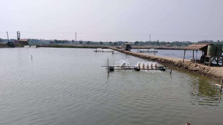 Gujarat is the fourth most productive shrimp farming state in India