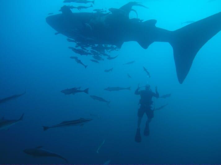 Erik Vis diving off an offshore aquaculture facility