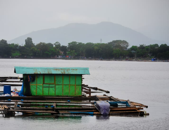 A typical freshwater cage farm in the Laguna area of the Philippines