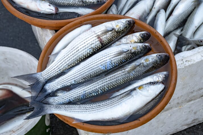 Egypt produces 160,000 tonnes of grey mullet a year