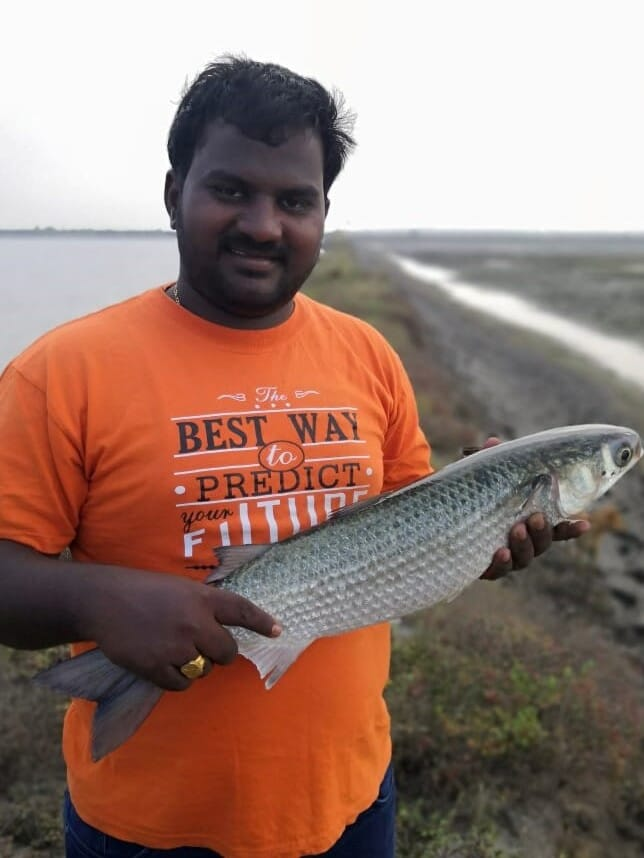 Mullets are farmed in a wide variety of countries, including India