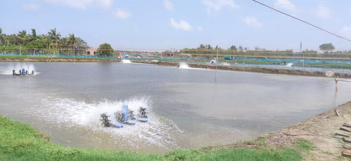 Shrimp farm with earthen ponds and multiple paddle wheels