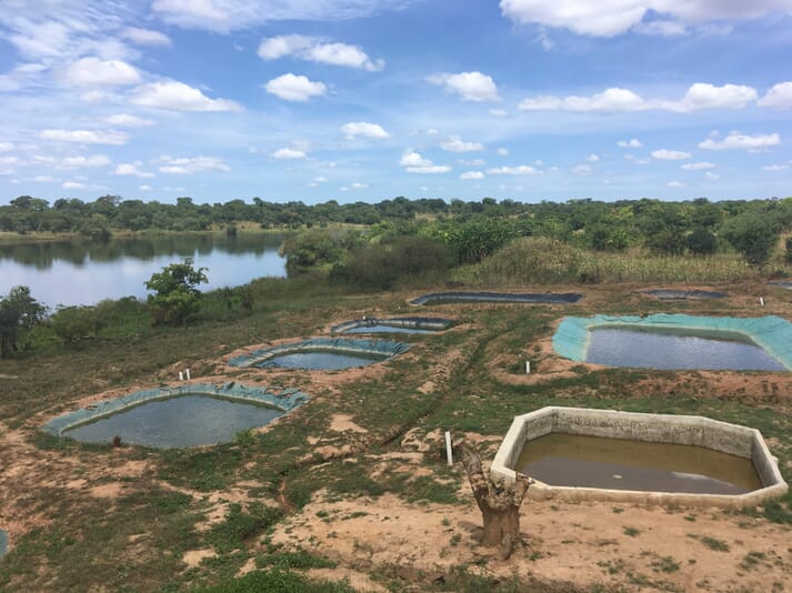 Series of earthen catfish breeding ponds, next to a river