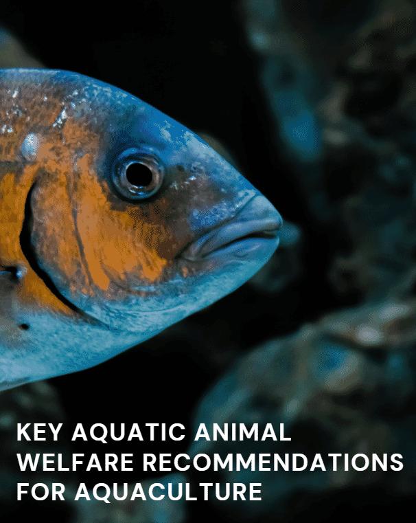 The Aquatic Life Institute's Key Aquatic Animal Welfare Recommendations for Aquaculture