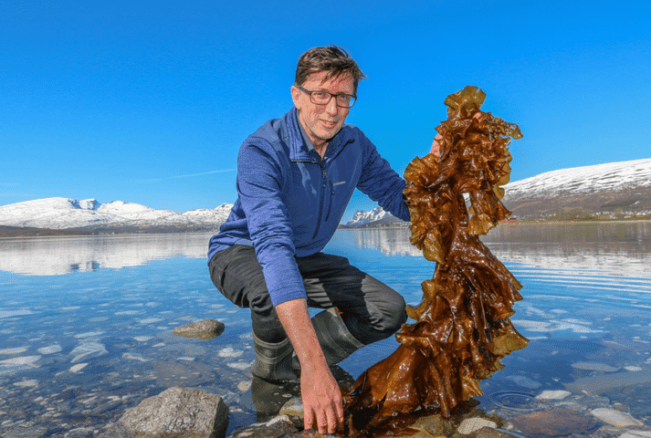 Nofima's research is helping to develop kelp into food