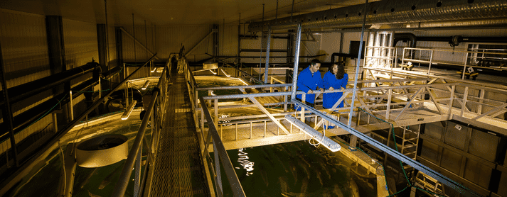 Nofima Centre for Recirculation in Aquaculture at Sunndalsøra, where research on effects of light on post-smolt has been carried out