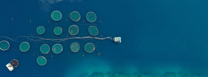 The oceans cover 71 percent of the Earth's surface, but only produce around 5 percent of our food