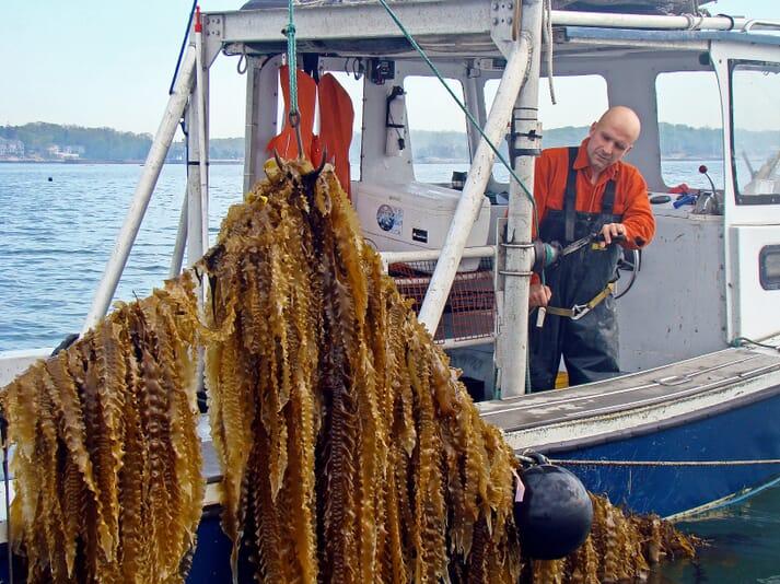 US seaweed farming pioneers include Bren Smith of GreenWave