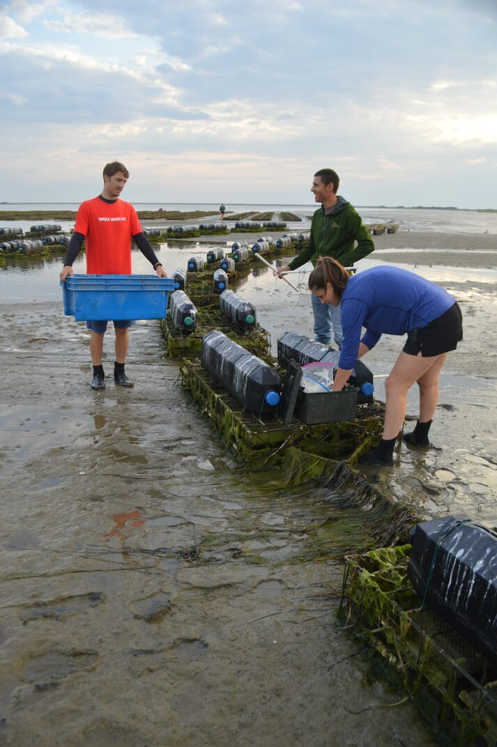 Northeastern University Marine Science Center researchers Forest Schenck and Kelsey Schultz and TNC Coastal Program Manager Steve Kirk (middle) prepare camera equipment to monitor oyster growing gear at an Island Creek Oysters farm in Plymouth, Massachusetts