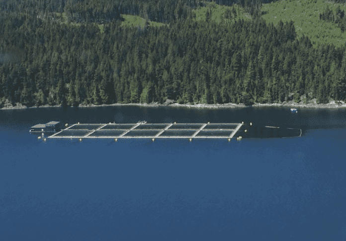 The Canadian government would like to see net pen farms, such as this, replaced by alternatives - including closed-containment systems and RAS