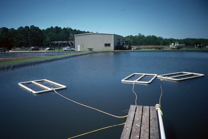 The author has expereince of growing oysters (C. virginica) in floating raceways inside 1,000m2 shrimp ponds