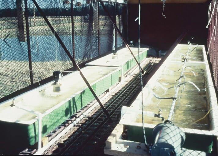 Inside the cotton trailer hatchery