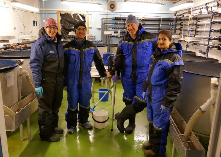 In April, researchers tested different doses on salmon at Tromsø Aquaculture Research Station, Norway. From the left, Mette Breiland and Carlo C. Lazado from Nofima and Sigurd Hytterød and Saima Nasrin Mohammad from the Norwegian Veterinary Institute