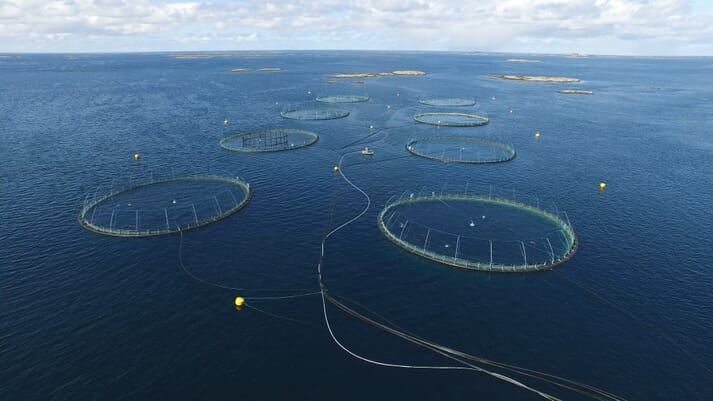 SINTEF's Aquaculture Engineering (ACE) research site in Sør-Trøndelag, which is run by a commercial salmon producer