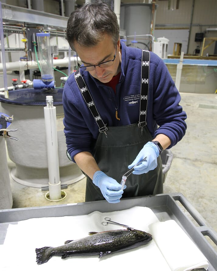 Chris Good collecting salmon tissues for analysis at The Conservation Fund Freshwater Institute in Shepherdstown, West Virginia