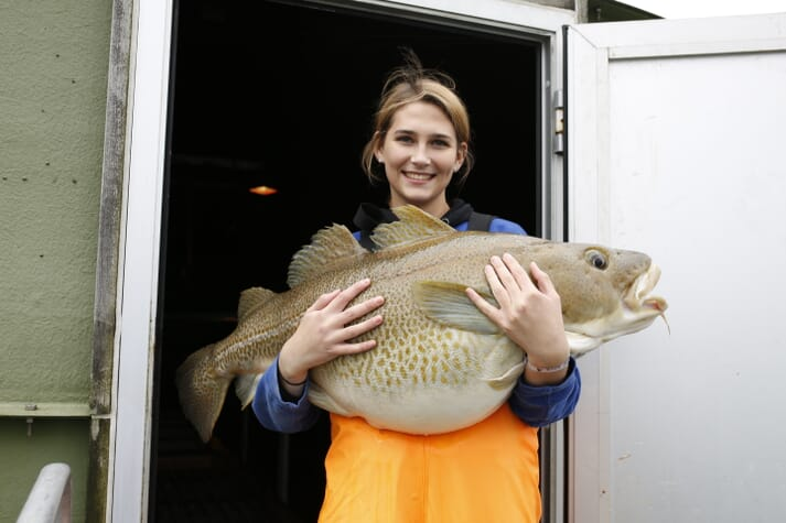 Havlandet has been farming fish on land since 2002 and are now on their 5th generation of cod broodstock