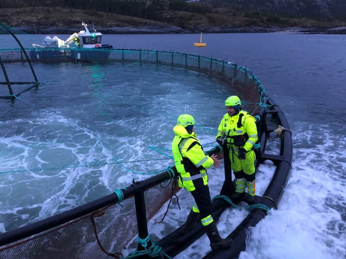 Juvenlie cod being transferred to new pens from a wellboat
