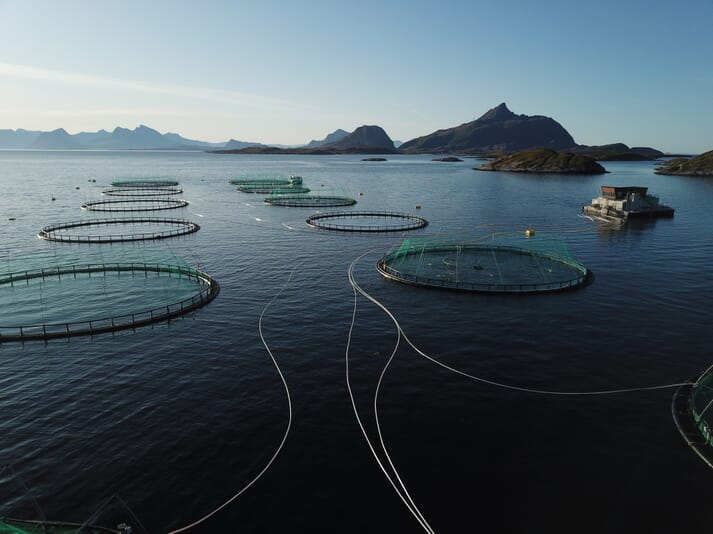 Aerial view of Kvarøy's salmon pens in northern Norway
