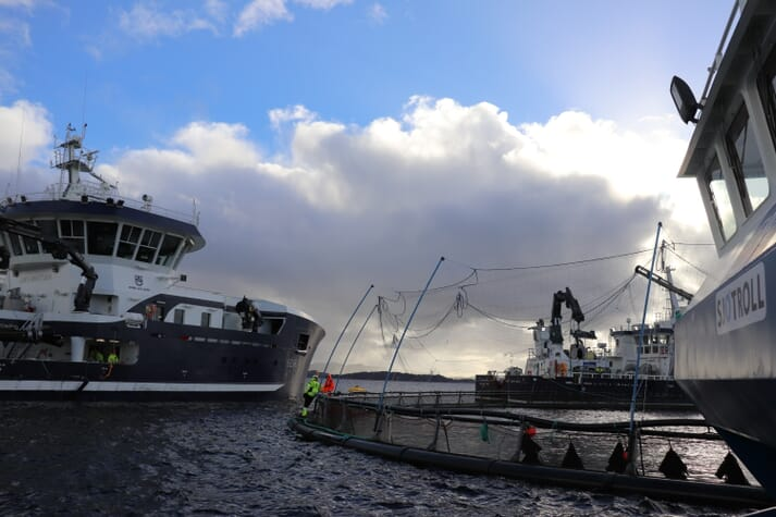 The crew prepares to put salmon through the wellboat's Optilicer system