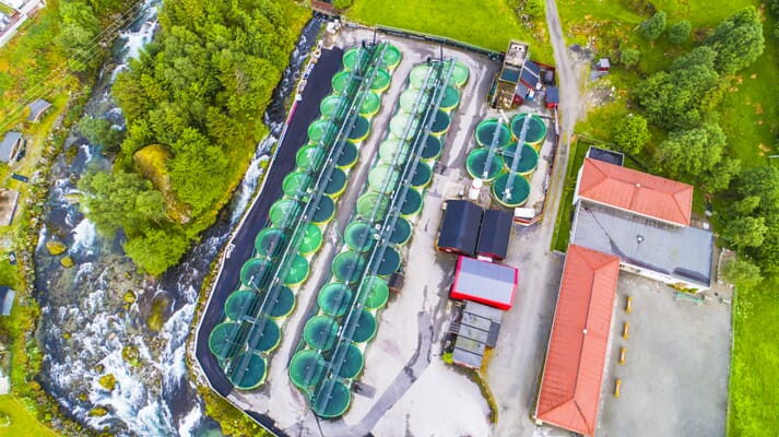 Smolts have long been produced in land-based farms, but more and more operators are now looking to raise market-sized salmon in them too