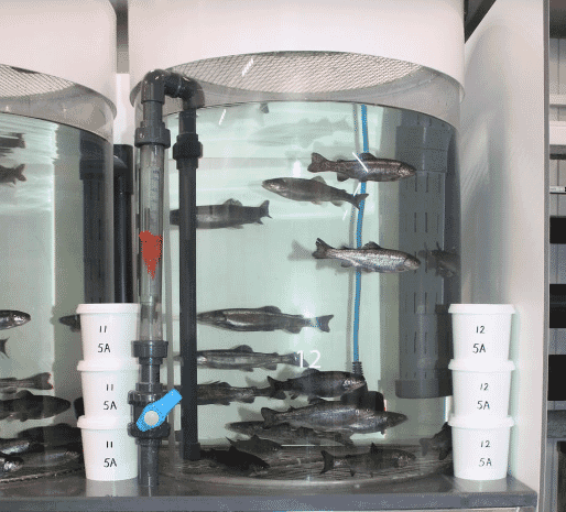 The €600,000 facility consists of 60 tanks in four separate RAS systems