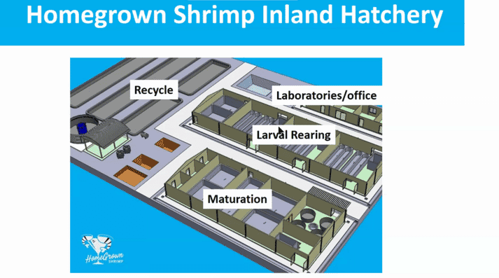 """""""Mature water"""" that contains tapioca flour, urea, ammonia, phosphate, sodium silicate and some bacillus probiotics is added to the Homegrown Shrimp RAS"""