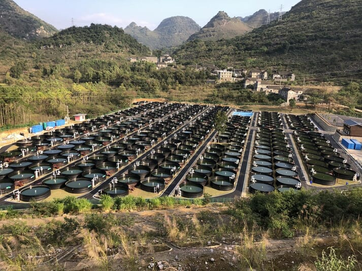 One of Nocera's flagship RAS farms, in China