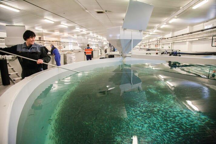 A trout RAS farm
