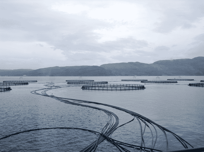 Russian Aquaculture is thought to need to invest up to $200 million to fulfill its ambitious plans to increase production