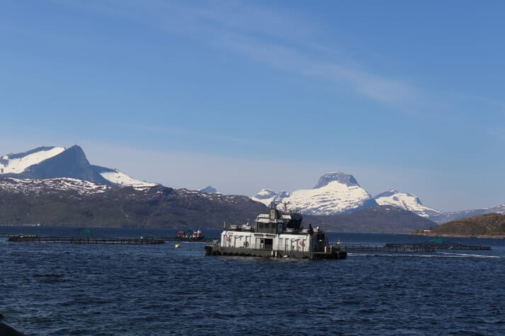 Many sites in Nordland remain unaffected by the bloom