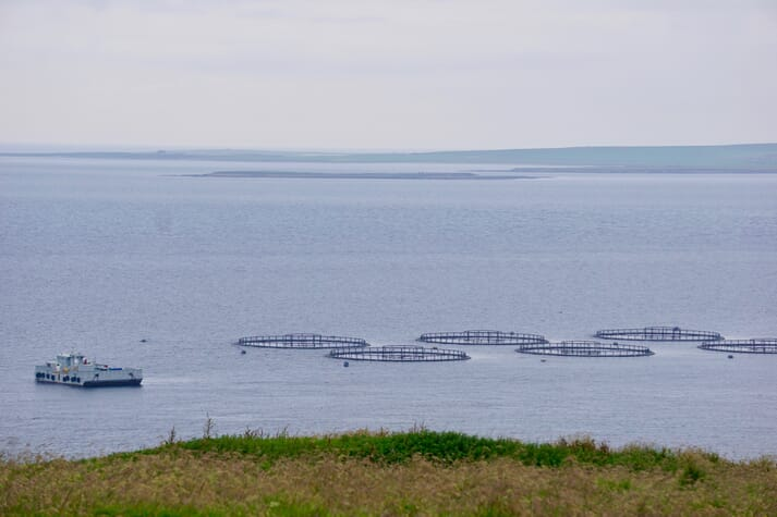 Project partners include Scottish Sea Farms