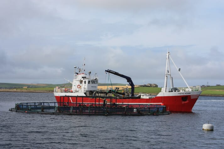 A vessel prepares to harvest salmon from a pen in Orkney