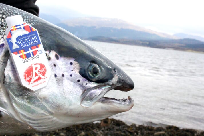 The value increase of Scottish salmon exports to Europe fell well short of the volume increase