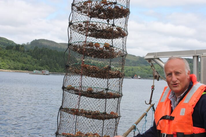 An IMTA project run by The Scottish Salmon Company and Loch Fyne Oysters has succeeded in producing commercial crops of seaweed and queen scallops