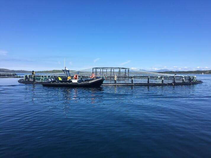 A fish health inspection at Mowi Scotland's salmon farm at Bagh Dail nan Ceann (BDNC), in Loch Shuna