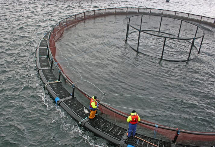 Two fish farm technicians standing at the edge of an ocean pen