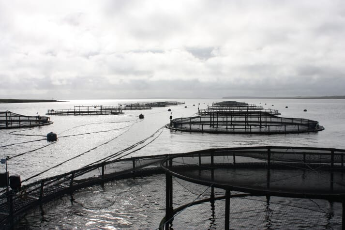 27 organisations have backed the call to stop the Scottish salmon farming industry's expansion until a number of targets are met