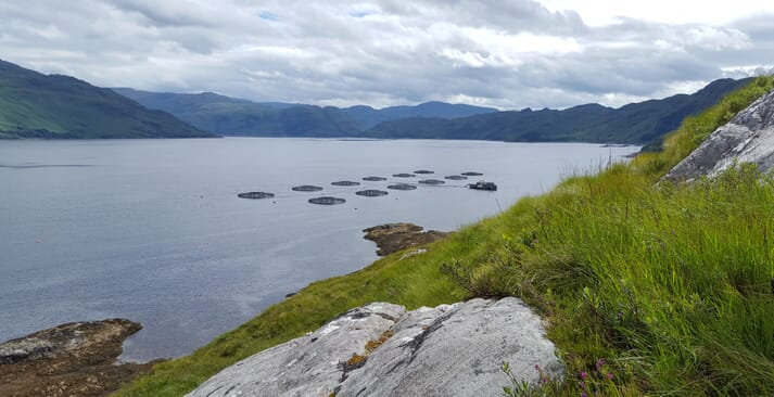 Socttish Sea Farms' Loch Nevis site. The company, jointly owned by SalMar and Leroy, is expected to harvest 26,000 tonnes of salmon in 2018.