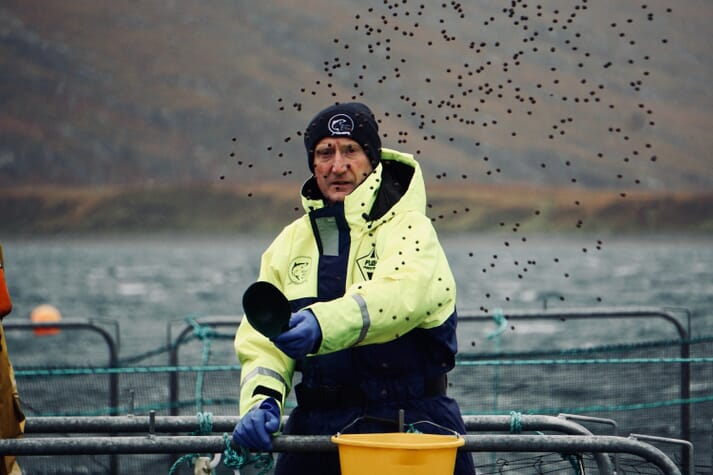 More than 150 tonnes of fresh Scottish salmon is due to cross the Channel every day in the run0up to Christmas