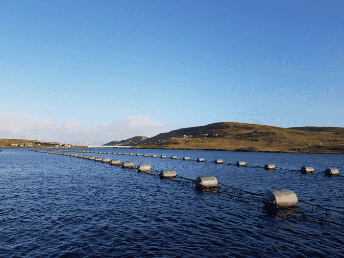 Shetland produces around 75 percent of Scotland's mussels