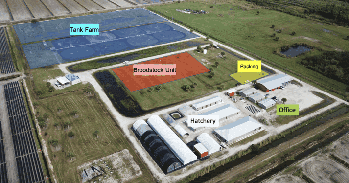 Plans for the Homegrown Shrimp site: the first harvest is due in the spring of 2022