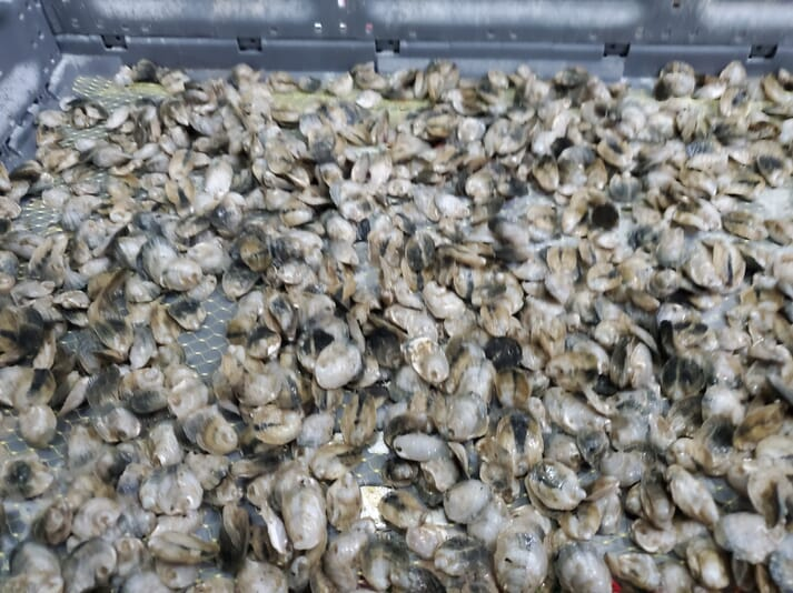 RDM Aquaculture is also experimenting with growing oysters at its Indiana facility