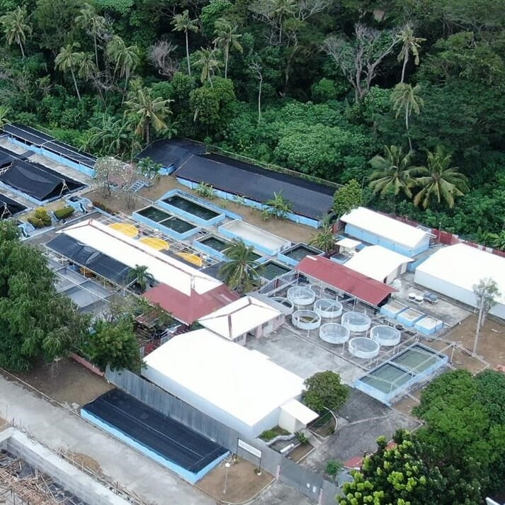 An aerial shot of the SEAFDEC/AQD shrimp hatchery complex where disease-free shrimp fry are produced