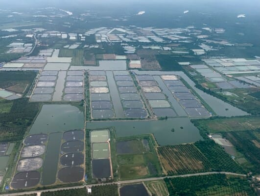 aerial view of multiple shrimp farms