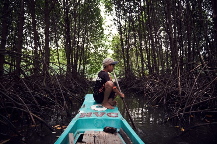 Large swathes of the country's mangroves were destroyed by Agent Orange during the Vietnam War