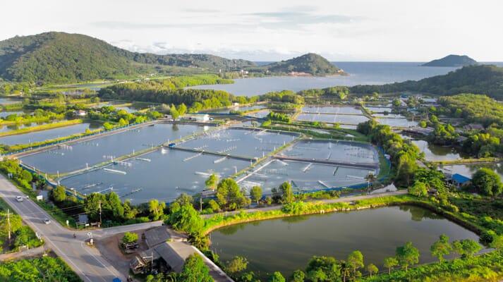 Aerial view of shrimp ponds